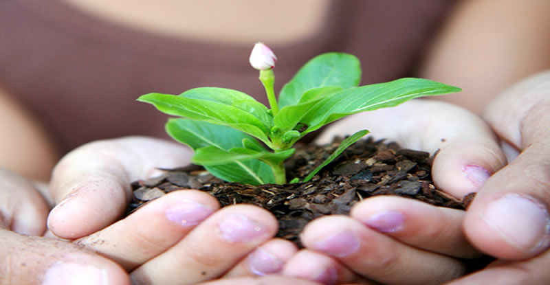 A childs hands holds soil with a plant sprouting from it